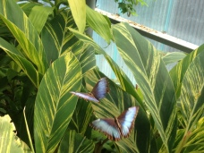 Butterflies in Artis