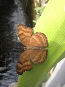 Close up of butterfly in Artis