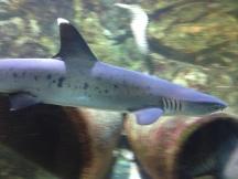Shark in Bergen aan Zee aquarium