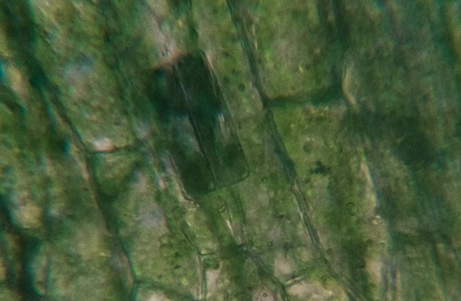 Waterweeds with algae