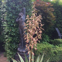 Yucca from side
