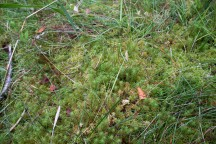 The floor here seemed like a bed of moss floating on water
